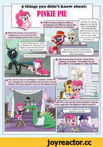 5 things you didn't know about: PINKIE PIE Pinkie Pie has a massive offshore savings account that she uses to buy all the stuff needed for her parties. X Pinkie Pie wishes she could be a changeling so she could use the shape changing abilities for pranks. PLEASE! Make me one! I'll be your best